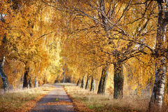 Autumn path. Path in the autumn forest Royalty Free Stock Photos