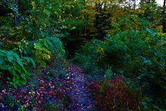 Autumn path in the forest Royalty Free Stock Image
