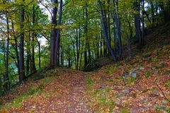 Autumn path in the forest Stock Photography