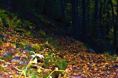 Autumn path in the forest Royalty Free Stock Photography