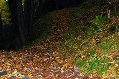 Autumn path in the forest Stock Image
