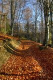 Autumn path. Leading through the forest in Polish Gorce mountains royalty free stock image