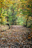 Autumn path in the forest Royalty Free Stock Images