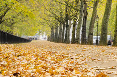 Autumn path in Hyde Park, London. England Stock Photography