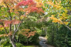 Autumn Path in Koko-en Gardens, Himeji, Japan. A Path in between colorful trees in autumn at Koko-en Garden in Himeji, an Edo Style Japanese Garden located next royalty free stock image