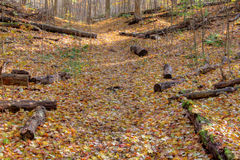 Autumn Path and Logs Royalty Free Stock Images
