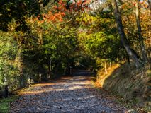 Autumn path Stock Photography