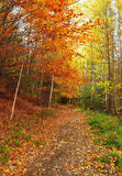 Autumn path. Multicolor forest leaves and walking path. Autumn landscape.  Romantic fall trail Royalty Free Stock Images