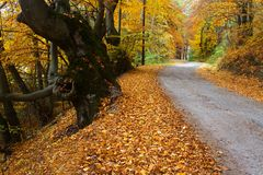 Autumn path. Multicolor forest leaves and walking path. Autumn landscape.  Romantic fall trail Royalty Free Stock Image