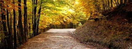 Autumn path panorama Royalty Free Stock Photos