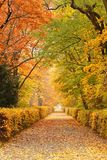 Autumn path in park. Path covered in leaves in park in autumn Stock Photography