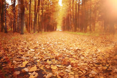 Autumn path in the park Stock Photo