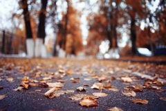 Autumn path in the park Royalty Free Stock Photo