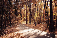 Autumn path in the park Royalty Free Stock Image