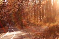 Autumn path in the park Stock Photos