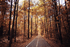 Autumn path in the park Stock Photography