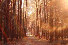 Autumn path in the park Royalty Free Stock Photography