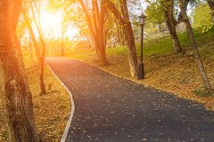 Autumn path in the park. Yellow leaves on the trees. Stock Photography