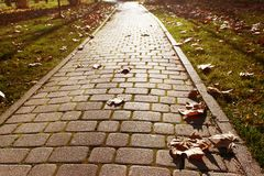 The autumn path is paved with cobblestones. The footpath is paved with cobblestones, with scattered maple leaves Stock Image
