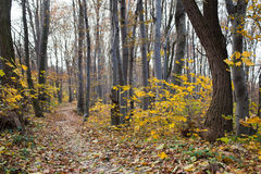 The autumn path Royalty Free Stock Image