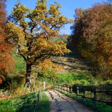 Autumn path with a shadow from the wooden fence Royalty Free Stock Images