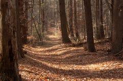 Autumn path thru woods Stock Photos