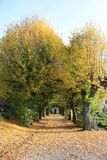 Autumn path to church Stock Images