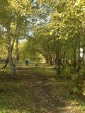 Autumn Path to Distant Bicyclist Stock Photos