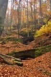 Autumn path Royalty Free Stock Photo