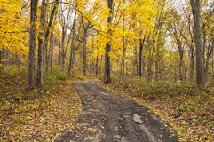 Autumn Path. Tranquil autumn path in Missouri royalty free stock photography