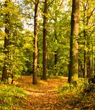 Autumn path among trees Royalty Free Stock Images