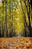 Autumn path in the wood Royalty Free Stock Images