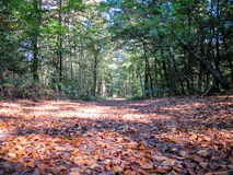 Autumn path in woodlands, Netherlands Stock Photos
