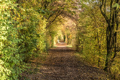 Autumn path in the woods. Royalty Free Stock Photos