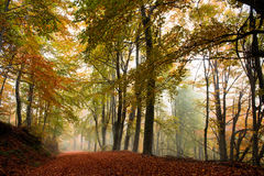 Autumn path in the woods Royalty Free Stock Photos