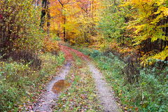 Autumn path in the woods Royalty Free Stock Photography