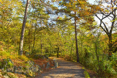Autumn path through the woods Stock Photography