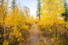 Autumn path in the woods Stock Photography
