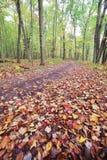 Autumn Pathway Fotografie Stock
