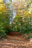 Autumn Pathway Photo libre de droits