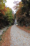 Autumn Pathway. Landscape with a path leading through forest in autumn Royalty Free Stock Photography