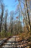 Autumn Pathway. A path leading through a wonderful autumn scene Royalty Free Stock Photo