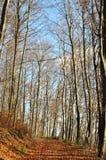 Autumn Pathway. A path leading through a wonderful autumn scene Stock Photo