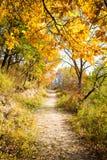 Autumn Pathway arkivfoto