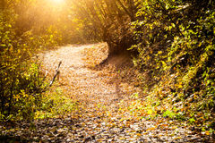 Autumn Pathway. In primeval forest Stock Images