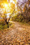 Autumn Pathway Stock Photos