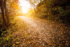 Autumn Pathway fotografering för bildbyråer