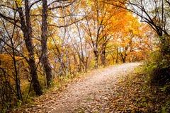Autumn Pathway imagens de stock royalty free