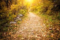 Autumn Pathway fotografia de stock royalty free