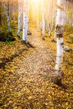 Autumn Pathway royaltyfri bild